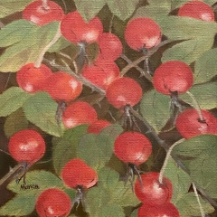 A Gift from the Cape: Beach Rose Hips
